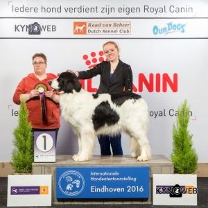 JH_1_Zondag_Eindhoven_2016_Kynoweb- Ernst von Scheven_January 24, 2016_15_38_02