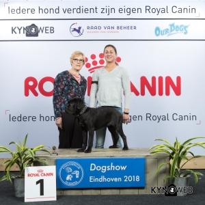 J_1_EINDHOVEN_2018_Kynoweb__20180204_15_52_18