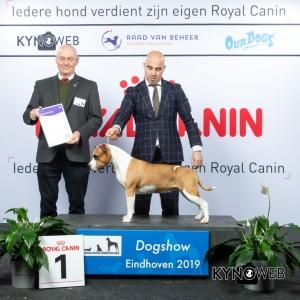 G_3_1_DOGSHOW_EINDHOVEN_2019_KYNOWEB_20190202_14_52_17_KY3_7214