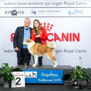 J_2_DOGSHOW_EINDHOVEN_2019_KYNOWEB_20190202_13_45_49_KY3_7141