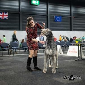 *** Dog Show Eindhoven, 8-9 februari 2020 Venray   ***