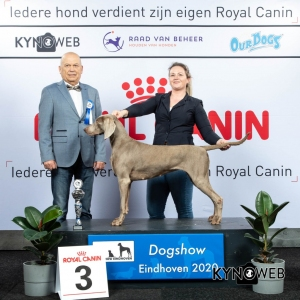 GROUP_7_3_LR_DOGSHOW_EINDHOVEN_2020_KYNOWEB_KY3_2200_20200208_16_21_02