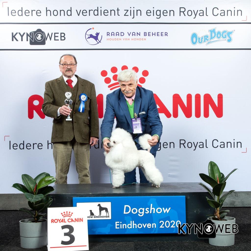 V_3_LR_DOGSHOW_EINDHOVEN_2020_KYNOWEB_KY3_2746_20200209_15_20_15