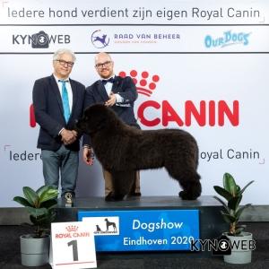 J_1_LR_DOGSHOW_EINDHOVEN_2020_KYNOWEB_KY3_2708_20200209_15_02_34